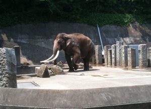 kanazawa_zoo